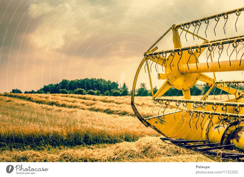 Harvester rear on a field Summer Work and employment Machinery Nature Landscape Plant Autumn Growth Hot Yellow Gold Colour orange Farm ripe food machine grain