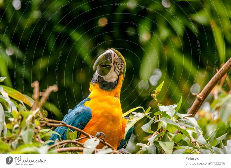 Parrot in a tree Nature Blue Beautiful Green Colour Summer Loneliness Animal Yellow Bird Bright Wild Feather Sit Wing Pet