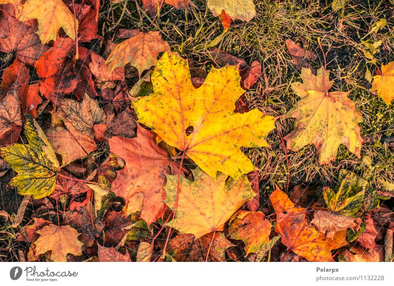 Autumn leaves in warm colors Beautiful Garden Environment Nature Landscape Plant Tree Leaf Park Forest Ornament Bright Natural Brown Yellow Gold Green Red