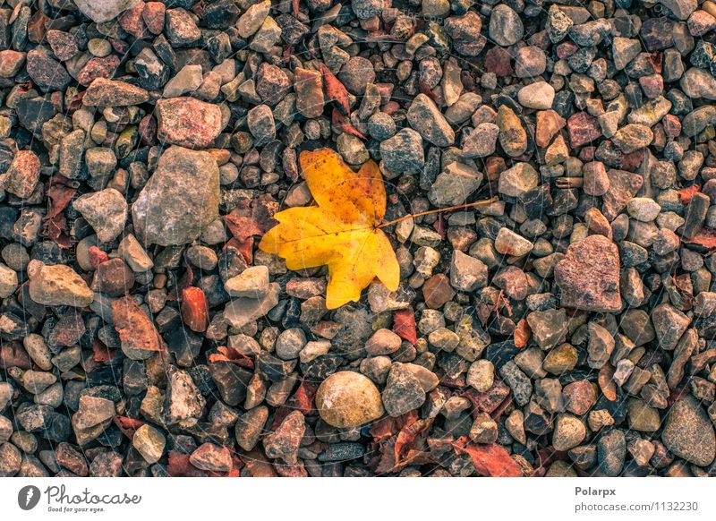Yellow leaf in autumn Nature Plant Beautiful Colour Tree Red Leaf Environment Warmth Autumn Natural Brown Bright Rock Park