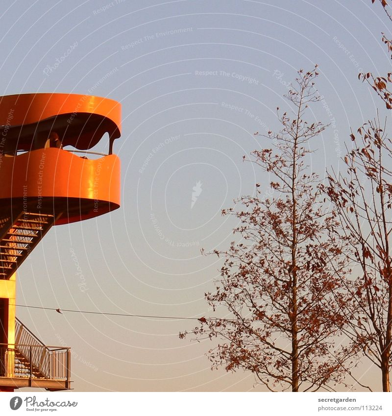Nature Sky Tree Winter Vacation & Travel Leaf Autumn Window Room Lighting Orange Fear Hamburg Tall Stairs