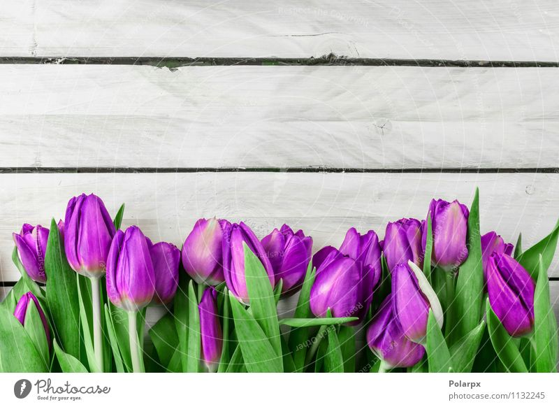 Tulip flowers on wooden background Nature Plant Green Beautiful White Flower Leaf Adults Blossom Love Spring Natural Pink Growth Fresh Decoration