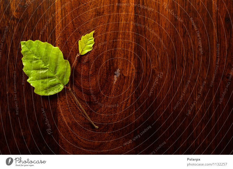 Green leaf on wood Nature Old Plant Colour Tree Leaf Forest Natural Art Garden Brown Design Fresh Decoration Beauty Photography
