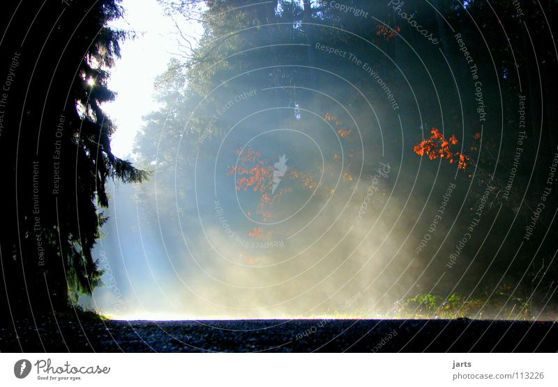 Tree Sun Street Forest Cold Autumn Warmth Lighting Fog Physics Celestial bodies and the universe