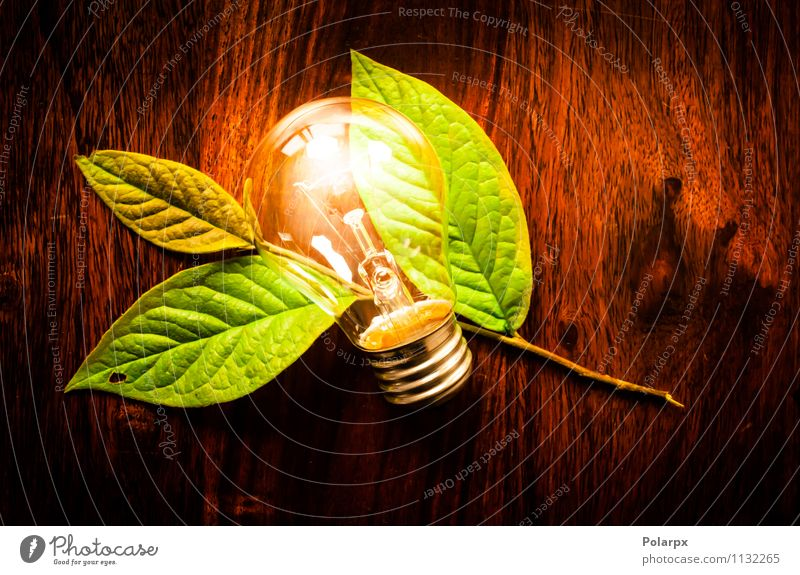 Light bulb and green leaf Save Lamp Table Technology Environment Nature Plant Tree Leaf Growth Dark Friendliness Bright Natural Green White Energy Idea