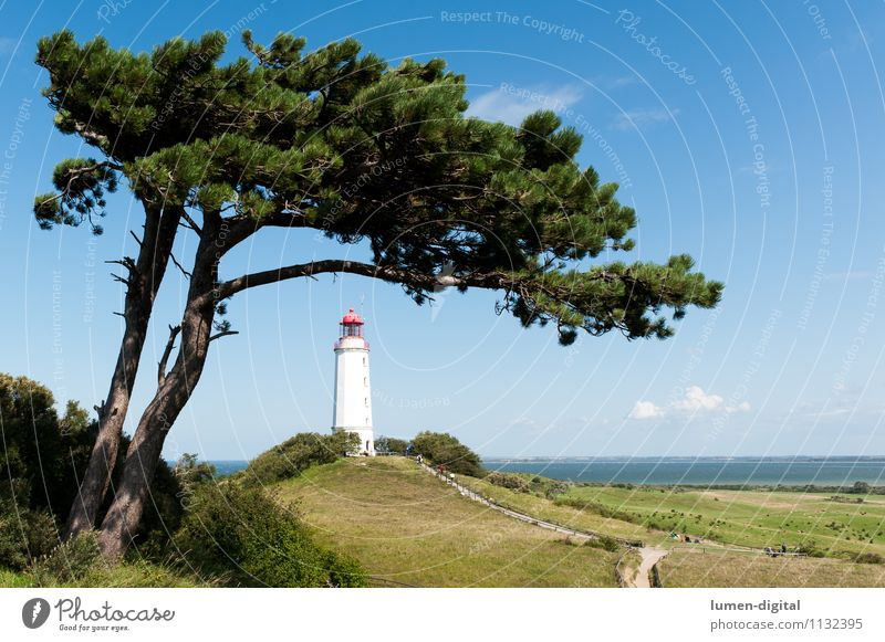 Lighthouse at Hiddensee Vacation & Travel Tourism Summer Nature Landscape Tree Pine Hill Coast Baltic Sea Island Germany Europe Tower Navigation White GDR Sky