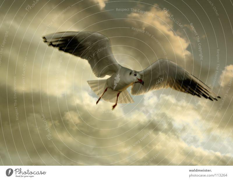 Sky Ocean Beach Clouds Bird Flying Aviation Seagull Animal Black-headed gull
