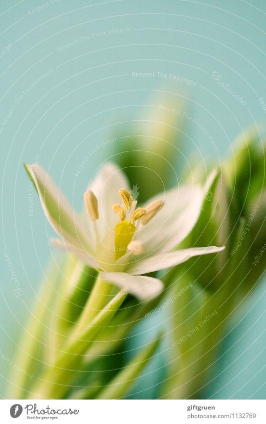 Nature Plant Beautiful Green White Flower Leaf Yellow Blossom Spring Happy Fresh Elegant Beginning Joie de vivre (Vitality) Blossoming