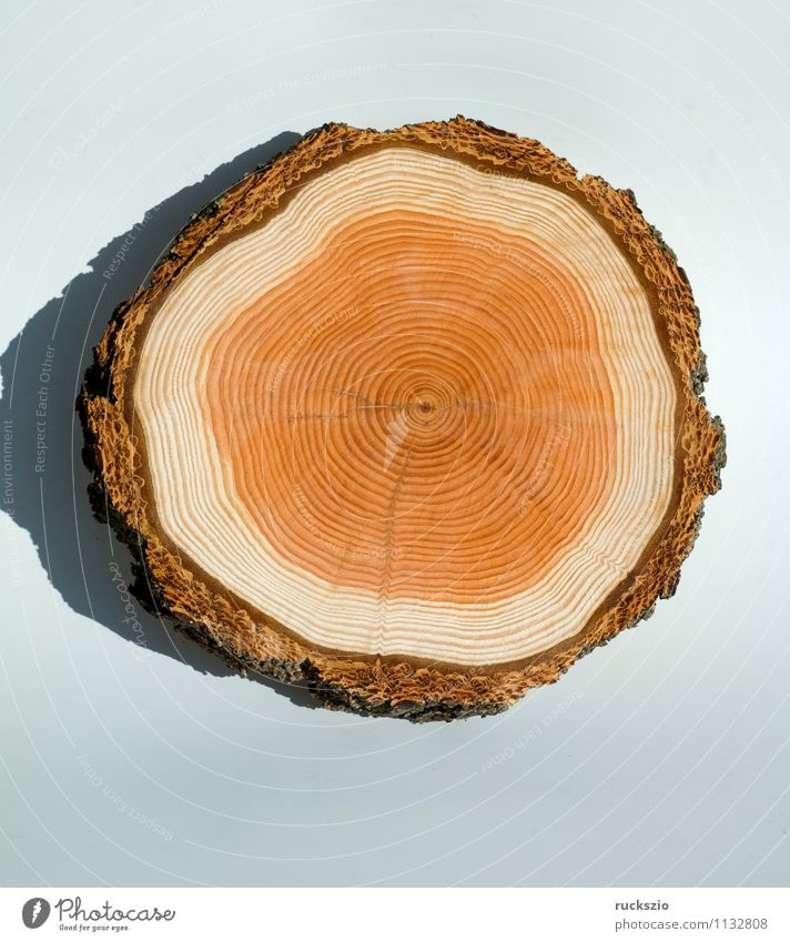 annual rings, wooden disc Tree Wood Free Brown White Annual ring tree ring wooden ring Wood grain ring-shaped cambium ring laerchen tree disc Tree section Larch