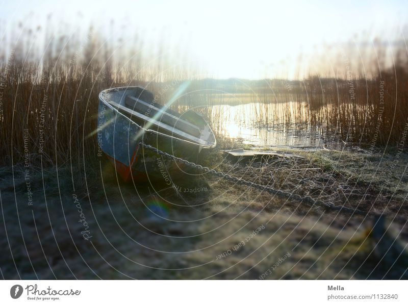 homesick Environment Nature Landscape Earth Water Sun Sunrise Sunset Sunlight Winter Grass Common Reed Reeds Coast Lakeside Pond Rowboat Watercraft Lie Old Cold