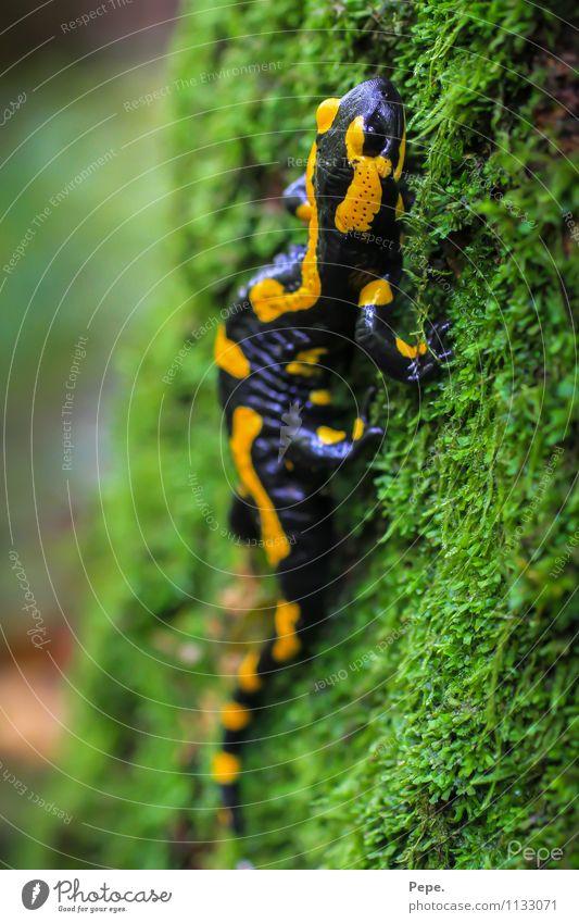 Beautiful Water Animal Forest Yellow Rain Wild Wild animal Fire River Burn Amphibian
