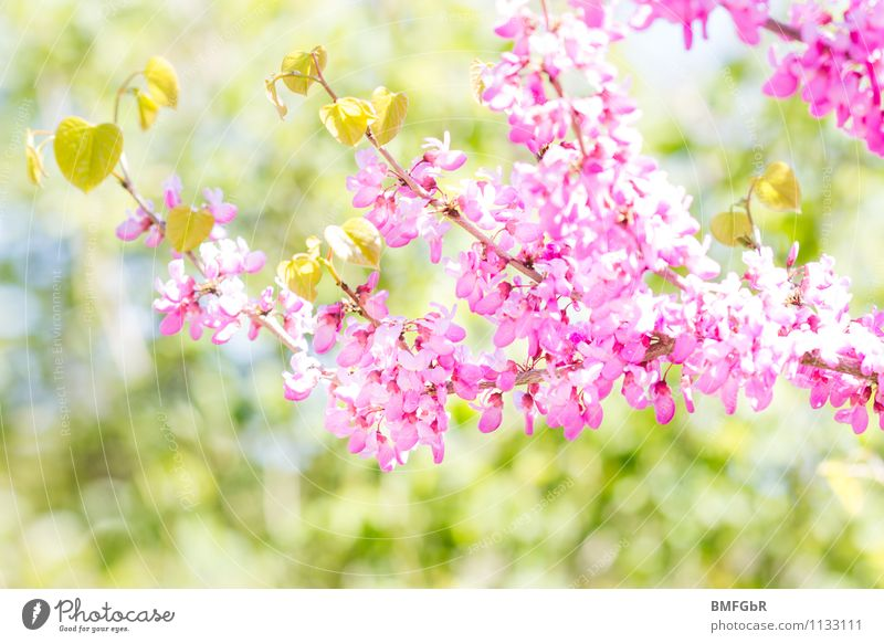 Nature Plant Beautiful Green Tree Leaf Landscape Animal Environment Spring Blossom Natural Happy Garden Bright Pink