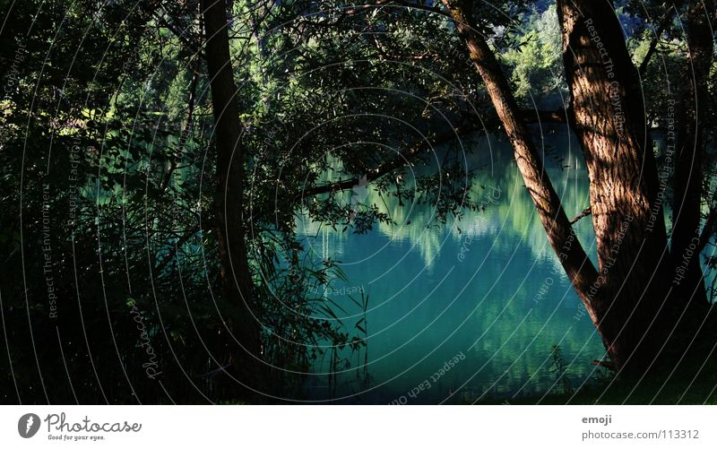 Nature Water Beautiful Tree Green Blue Plant Summer Calm Loneliness Colour Jump Spring Lake Moody Bushes