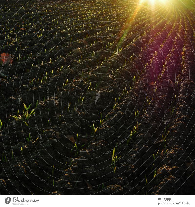 Joy Lanes & trails Earth Work and employment Field Future Floor covering Ground Reading Target Tracks Agriculture Gastronomy Footprint Rotate