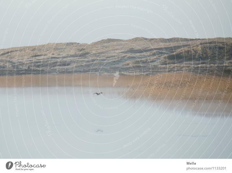 Nature Water Landscape Calm Animal Environment Natural Grass Coast Freedom Lake Flying Moody Bird Idyll Fog