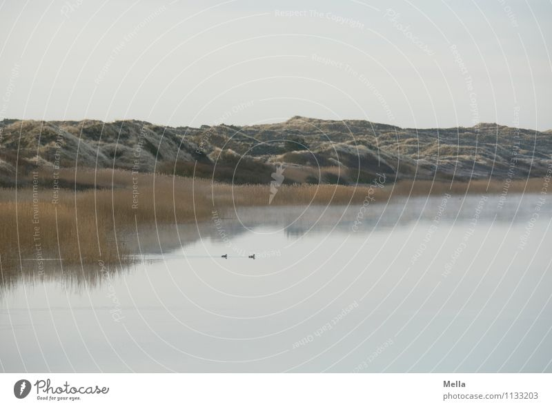 early Environment Nature Landscape Water Sky Common Reed Hill Coast Lakeside Pond Dune Cold Natural Relaxation Idyll Calm Moody Morning Colour photo