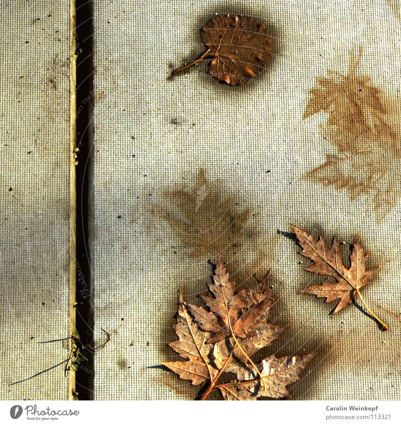 To be and to appear VII Leaf Surface Concrete Seam Furrow Autumn Seasons Time Transience Life Damp Grass Blade of grass Dirty Flat Silhouette Maple tree