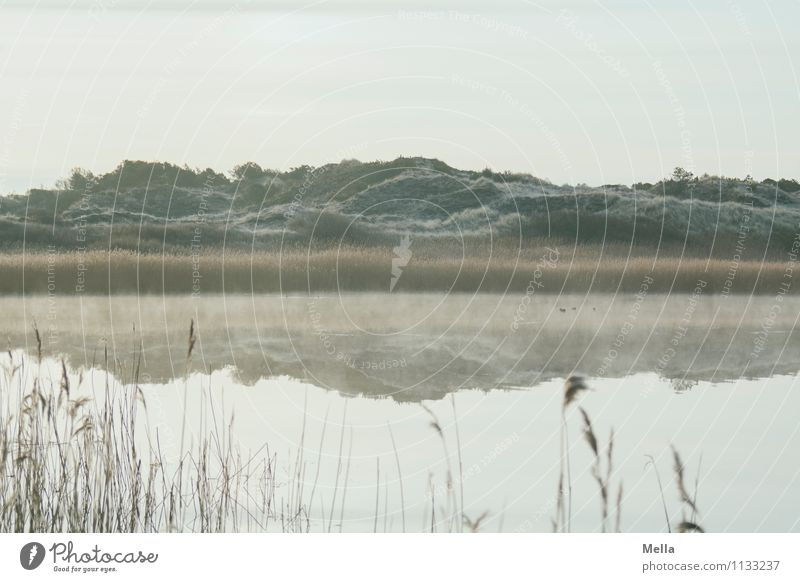 In the morning at seven in Denmark Environment Nature Landscape Elements Water Winter Climate Fog Ice Frost Grass Common Reed Hill Coast Lakeside Bay Pond