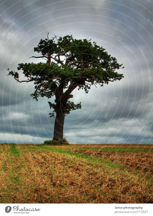 Nature Old Sky Tree Clouds Loneliness Far-off places Cold Autumn Meadow Lanes & trails Rain Moody Field Fear Wind