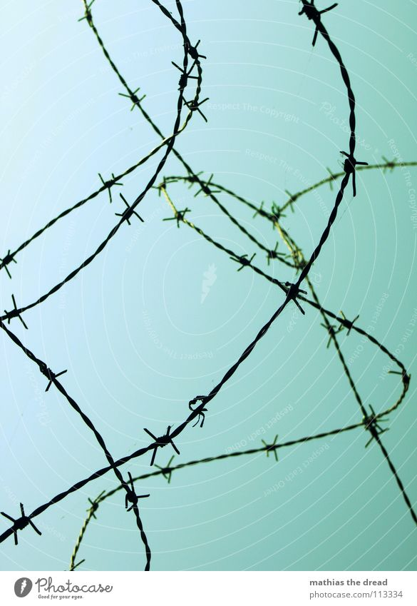 more barbed wire Wire Barbed wire Rolled Round Muddled Traffic infrastructure Safety Thorn Protection Defensive Point Curve Rotate aggro aggressive Sky Blue
