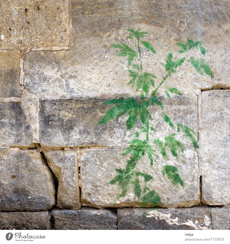 mauerBLÜMCHEN Plant Foliage plant Hemp Cannabis leaf hemp plant Wall (barrier) Wall (building) Stone wall Decoration Ornament Graffiti wallflower Green Emotions