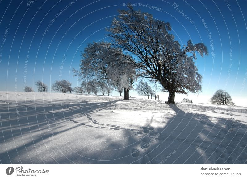 Christmas card 14 Sunbeam Winter Black Forest White Deep snow Winter sports Leisure and hobbies Vacation & Travel Background picture Tree Snowscape Horizon