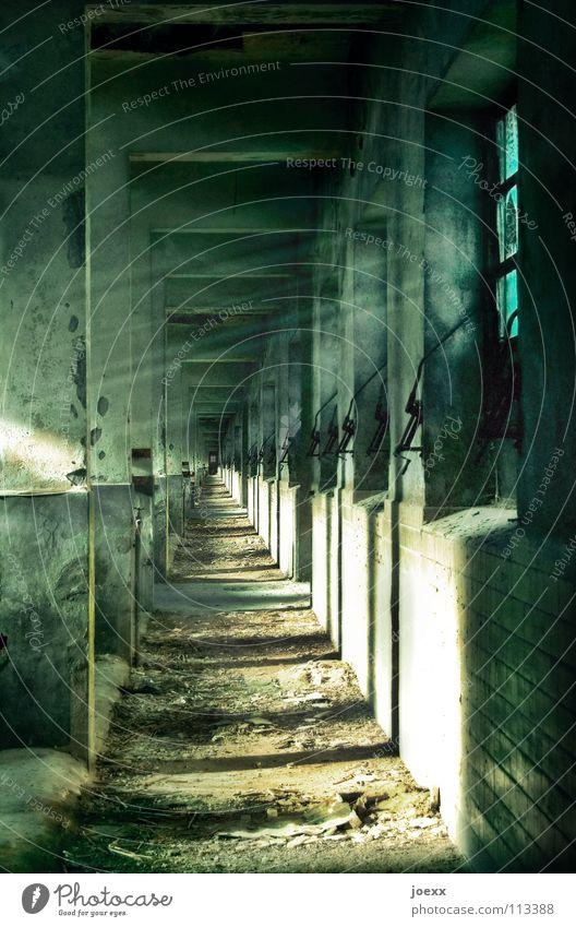 metamorphosis Concrete Sordid Infinity Window Odor Industrial wasteland Light Shaft of light Butcher Panic Torment Torture Ruin Killing Calm Support Animal