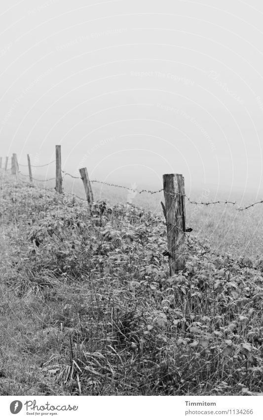 Karl in thought. Environment Nature Landscape Sky Winter Weather Fog Plant Grass Meadow Hill Pole Barbed wire fence Fence Wood Metal Think Looking Simple Gray