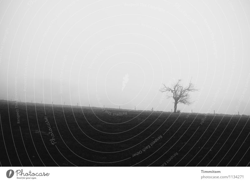 Weather's fine, all right! Environment Nature Landscape Plant Sky Autumn Fog Tree Grass Fence Fence post Dark Simple Natural Gray Black Emotions Exhaustion