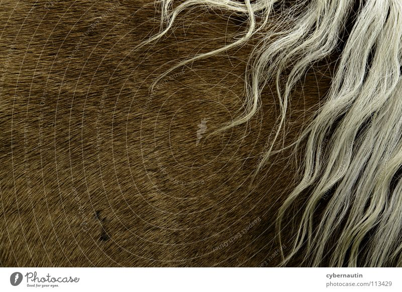 White Hair and hairstyles Brown Horse Pelt Mane