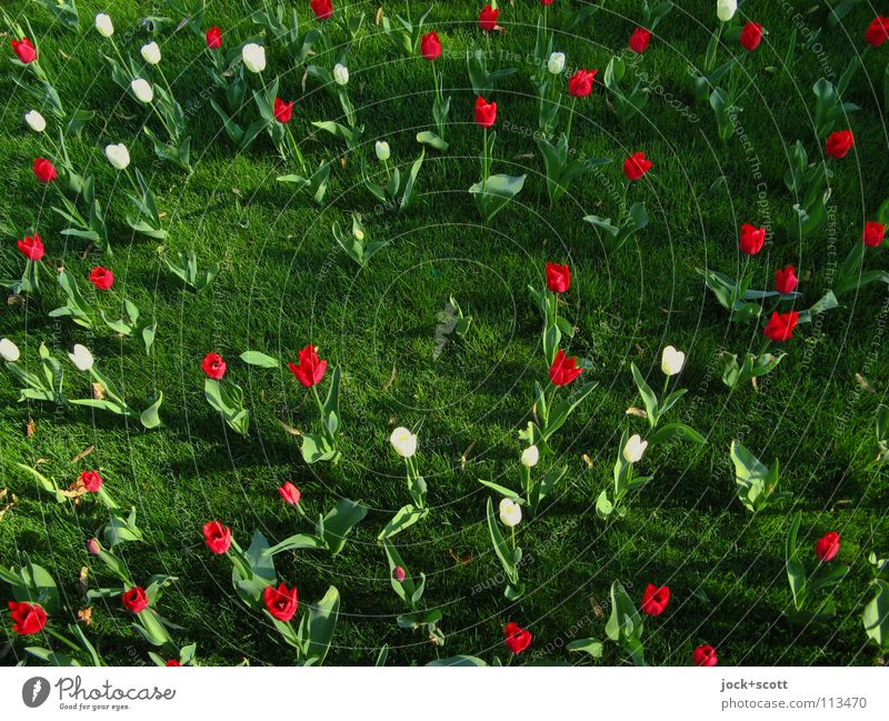 Nature Plant Beautiful Green Colour White Summer Red Flower Environment Warmth Meadow Bright Idyll Contentment Fresh