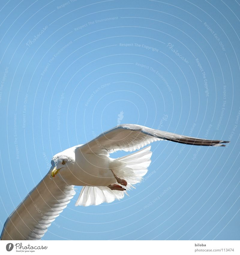 Sky Blue White Beautiful Ocean Animal Black Freedom Happy Bird Flying Elegant Tall Infinity Under