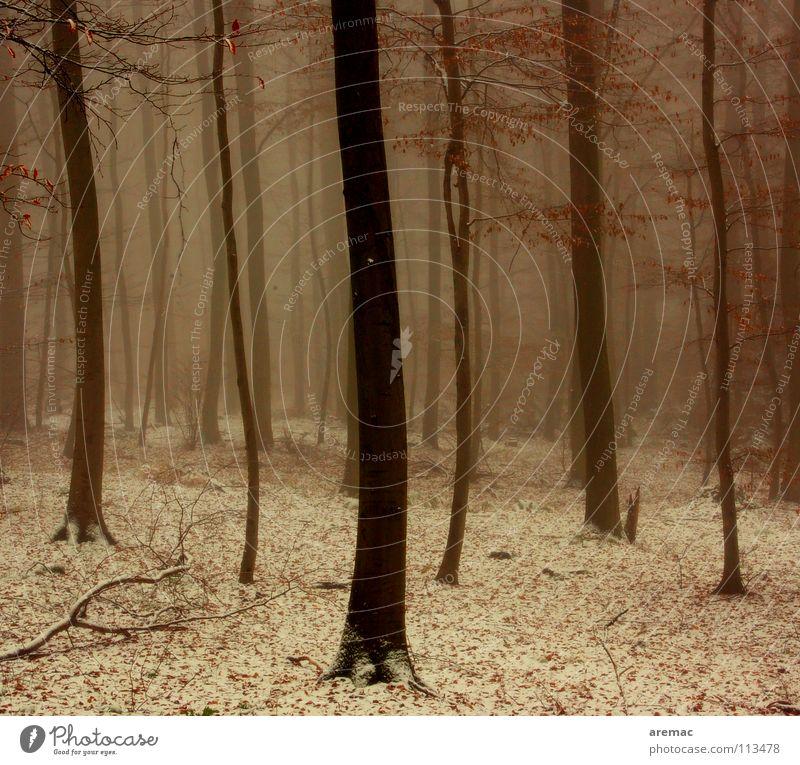 Tree Winter Forest Cold Snow Germany Fog Heidelberg Königsstuhl