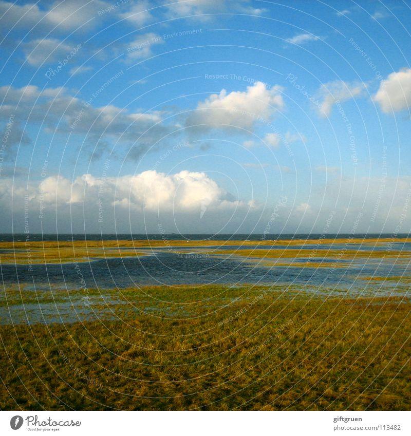 Nature Sky Ocean Beach Clouds Autumn Meadow Grass Landscape Coast Transience Seasons North Sea November October Bad weather