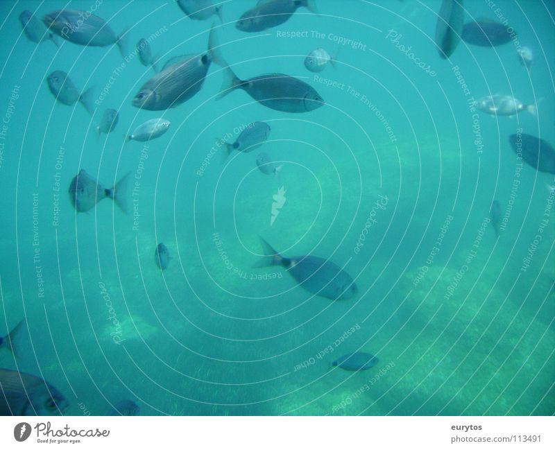 eat-sleep-go fishing... 2 Shoal of fish Ocean Underwater photo Fish Mediterranean sea tyrkis