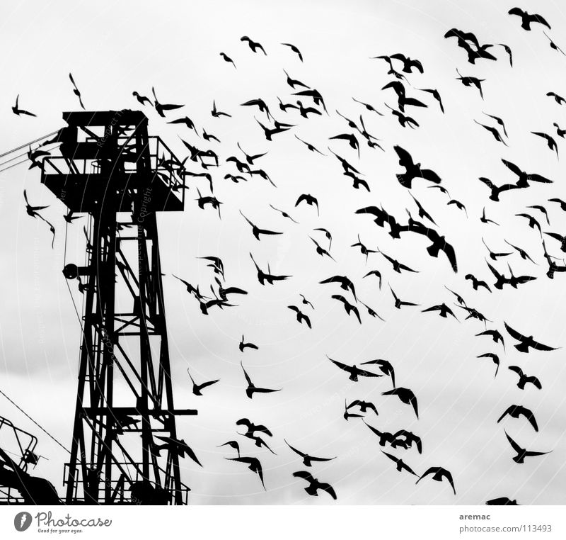White Black Bird Aviation Wing Harbour Crane Flock