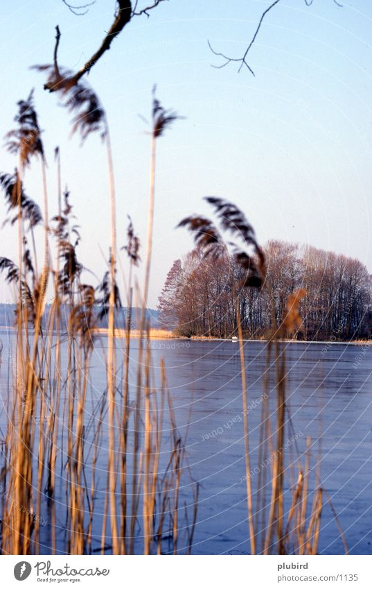 lakeshores Lake Water Island Coast