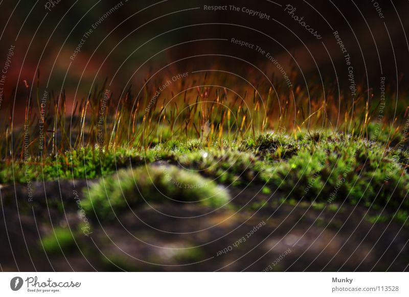 hairy affair Black Brown Green Yellow Strand of hair Go up Aspire Autumn Cold Winter Drizzle Macro (Extreme close-up) Background picture Blur Stone Gooseflesh