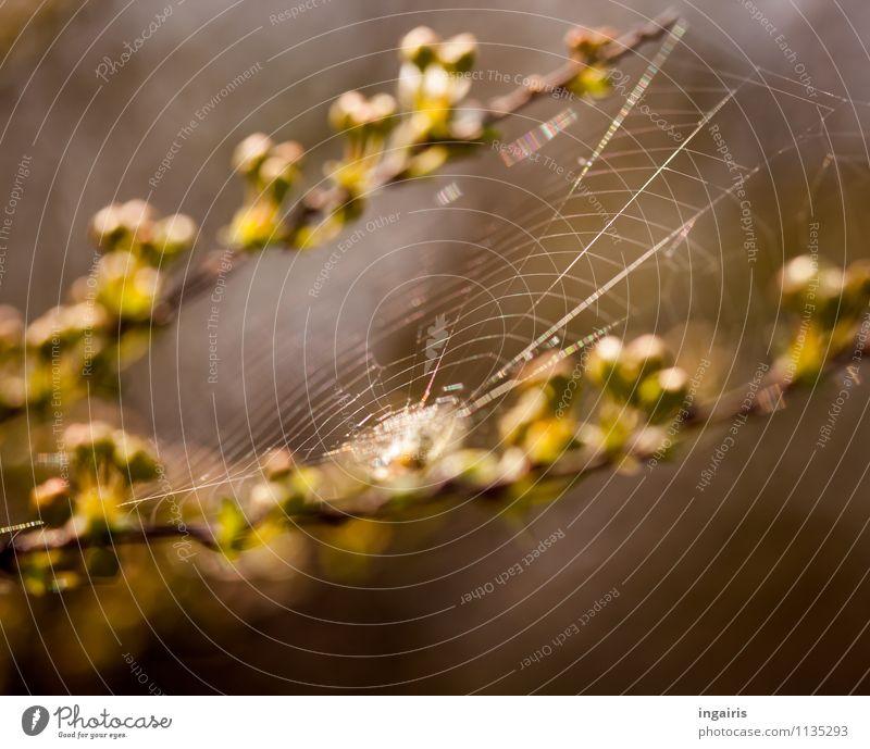 Nature Plant Green Animal Yellow Spring Natural Brown Moody Network Thin Ease Hang Inspiration Build