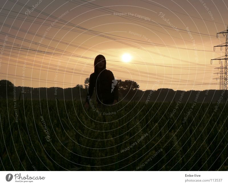 evening mood Dusk Sunset Field Cornfield Woman Loneliness Electricity Electricity pylon Horizon Black Tree Bushes Clouds Summer Transport Grain Cable Free