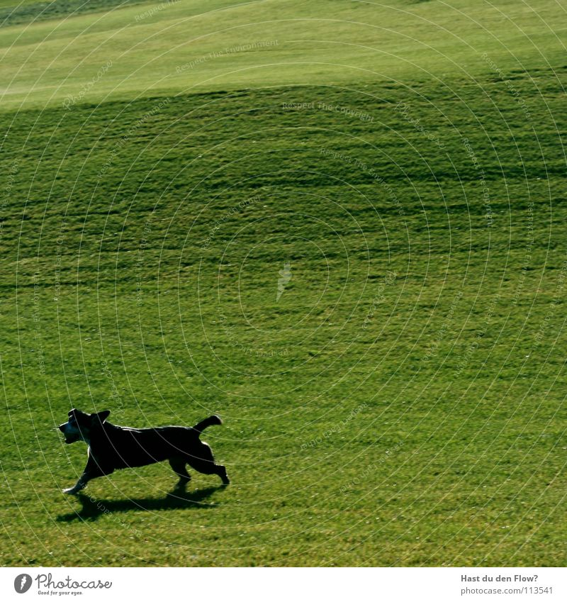 Nature Green Black Meadow Freedom Dog Lanes & trails Walking Earth Running Speed Ball Lawn Switzerland Hill Feces