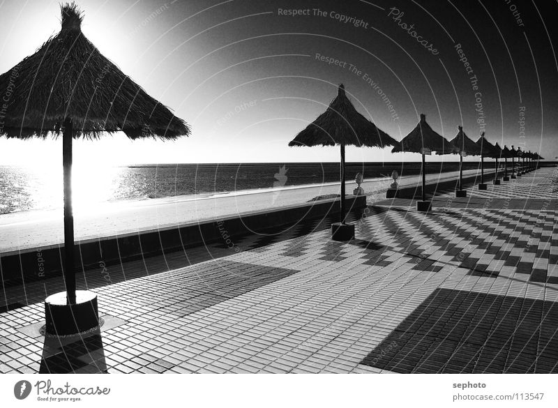 Rota del la luz Beach Palm tree Andalucia Sunshade Hotel Gastronomy Coast strand Sand Tile