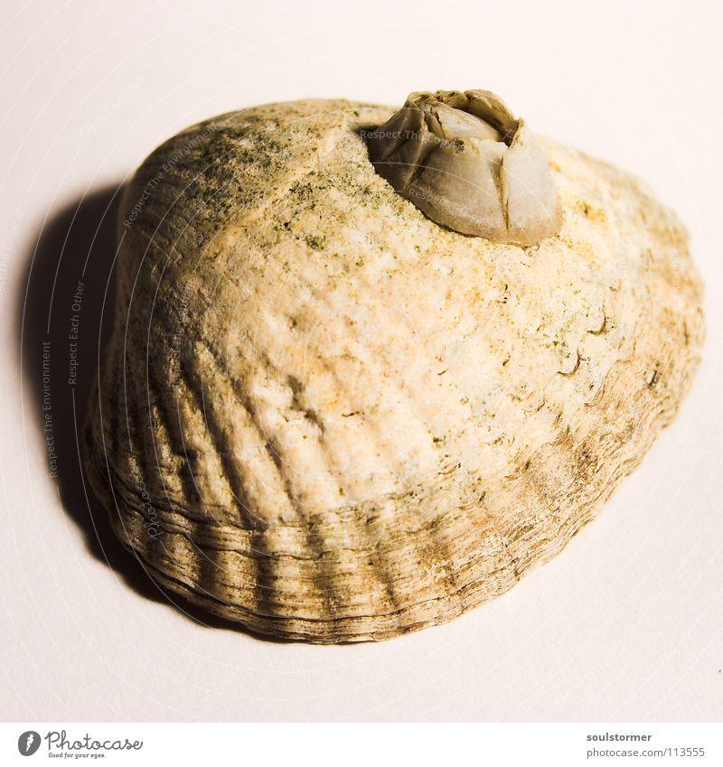 White Ocean Beach Animal Eyes Death Small Sand Lake Fear Food Design Speed Dangerous Nutrition Fish