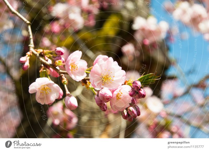 Sky Nature Plant Tree Landscape Environment Love Spring Meadow Blossom Garden Pink Park Weather Climate Beautiful weather