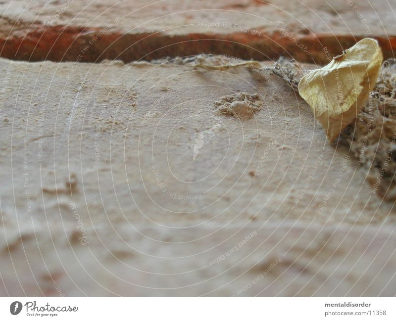 Old Leaf Stone Wall (barrier) Background picture Lie Part Dust Fragile Seam Dried Photographic technology