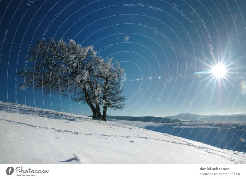 Christmas card 15 Sunbeam Winter Black Forest White Deep snow Hiking Leisure and hobbies Vacation & Travel Background picture Tree Snowscape Horizon Loneliness