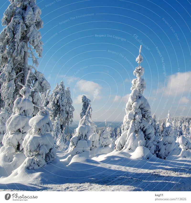 Sky Blue Beautiful White Tree Clouds Joy Winter Forest Cold Graffiti Snow Moody Beginning Target Hut