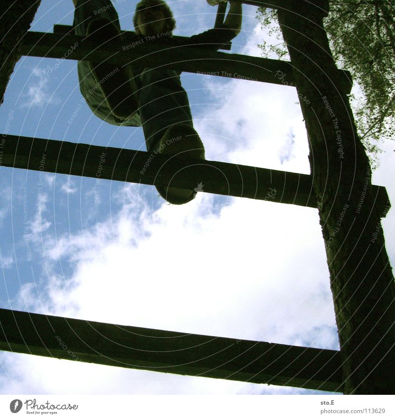 Human being Nature Youth (Young adults) Sky Tree Blue Summer Leaf Clouds Above Wood Tall Safety Stairs Climbing