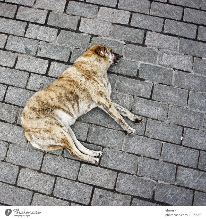 dog's life Animal Pet Dog 1 Lie Break Wellness Colour photo Exterior shot Structures and shapes Copy Space right Copy Space top Copy Space bottom Day