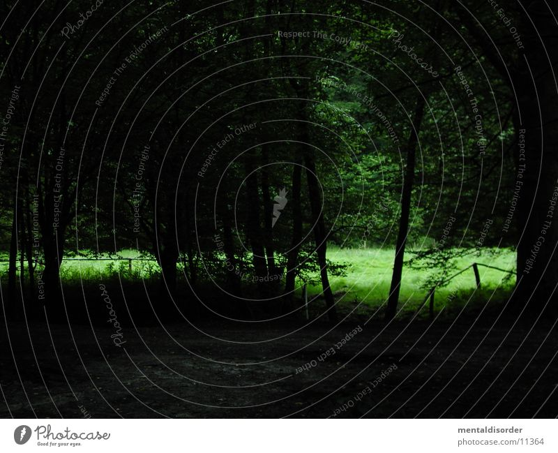 Nature Tree Green Forest Dark Meadow Grass Lanes & trails Bright Bushes Branch Few Clearing